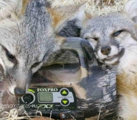 FOX 2011