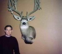 mule deer unit 12a