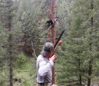 26Aug2018 Archery Bear shot 4B