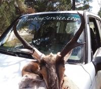 14Sep2018  Rifle Antelope 4B