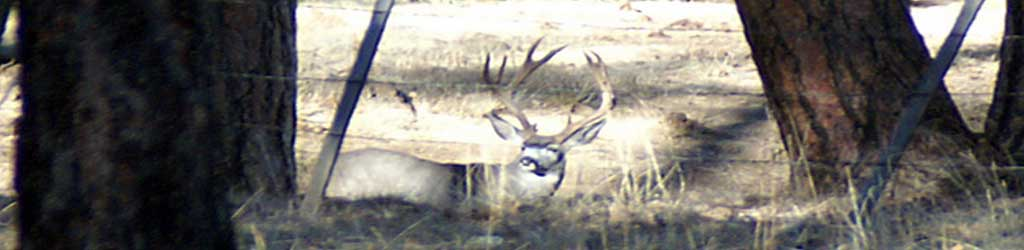 This Image Is Of A Guided Hunt For Mule Deer In Arizona.