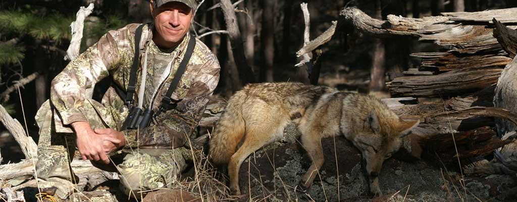 AZ Coyote hunting