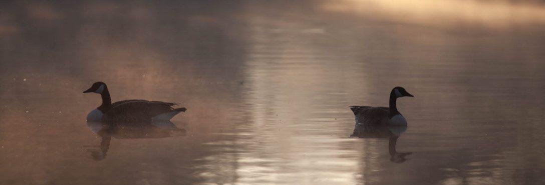 Arizona-Waterfowl-Guided-Hunts